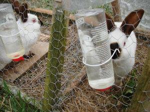 Как давать траву кроликам