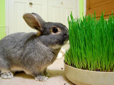 Кормление кроликов травой можно ли кроликам давать свежую траву