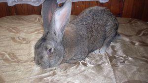 Как кормить и поить кроликов