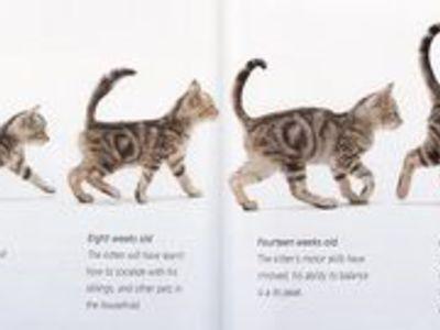 Как узнать возраст котенка в домашних условиях