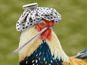 признаки птичьего гриппа у птиц