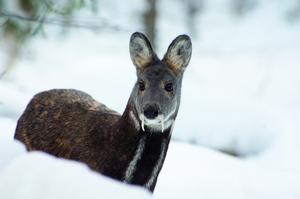 Животный мир тайги: климат, какие животные и растения можно встретить там
