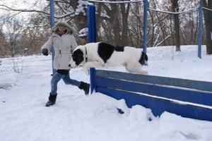 Дрессировка собак  любых пород