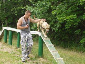 Как правильно дрессировать собаку в различных условиях
