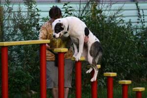Как правильно выбрать специалиста  специалиста, который будет заниматься с собакой