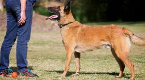 Каким командам необходимо обучать собаку