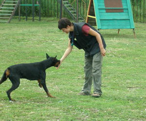 Организация занятий по дрессировке собаки