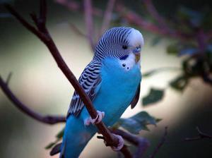 Сколько лет живут различные птицы в том числе вороны и попугаи 6