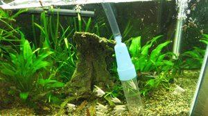 Выбор сифона для аквариума