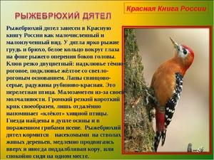 Доклад о птицах из красной книги редкие животные 5082