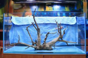 Роль коряги в аквариуме