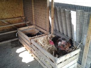 Гнездо из ящика