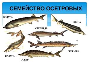 рыбы их названия и фото