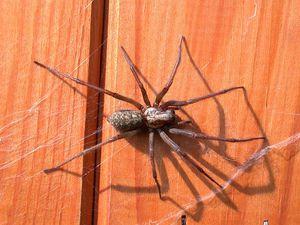 Как быть, если обнаружили паука