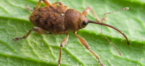 Насекомые жуки виды жуков жуки России чем питаются жуки личинки жуков