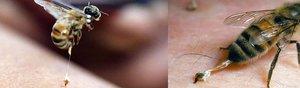 Где используется пчелиный яд