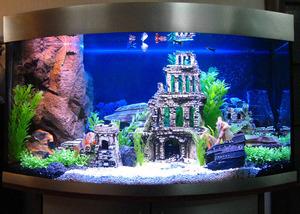 Как выбрать интерьер для аквариума