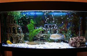 Интересные примеры оформления аквариума