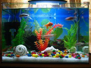 Оформление аквариума Интересные примеры оформления