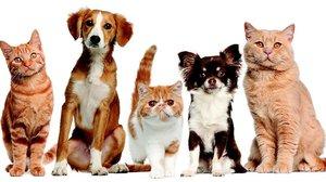Препарат для лечения животных