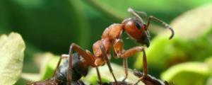 Рацион вредителя: чем питается тля в природе