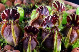 Особенности растений поедающие насекомых