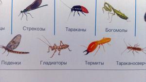 Какие существуют насекомые