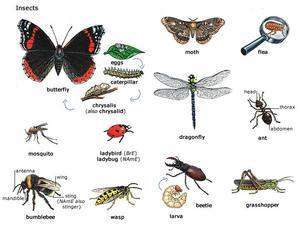 Названия насекомых