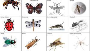 Название жуков насекомых