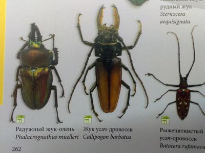 Название насекомого