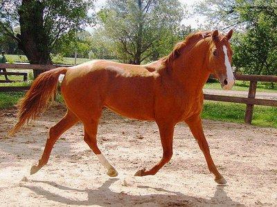 Удивительно красивые лошади буланой масти