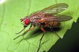 Где обитают мухи