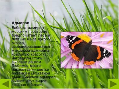 Бабочка Адмирал описание для детей доклад-сообщение