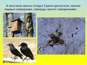 Особенность весенних птиц