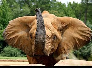 opisanie-slonov.jpg