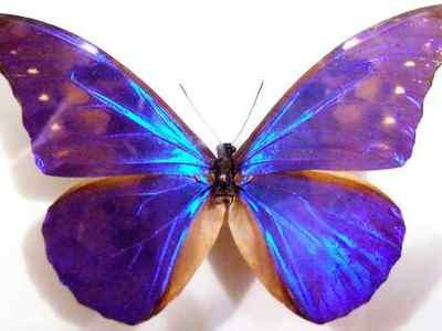 Бабочки — Энциклопедия «Вокруг света»