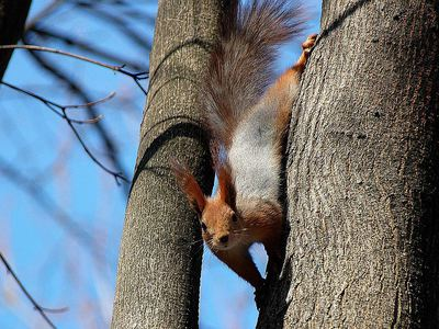Какие орехи можно белкам