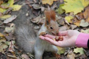 Угощенье для белки в лесу