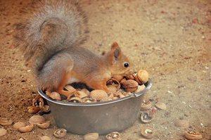 Питание белки в зоопарке