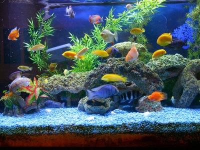 Сколько дней нужно отстаивать воду для аквариума