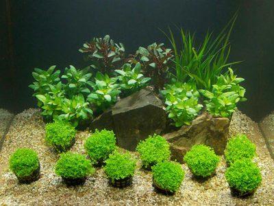 Питательный грунт для аквариумных растений: требования и разновидности питательного грунта для аквариума