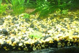 Како грунт в аквариуме лучше