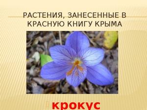 рассказ о любом растении из красной книги