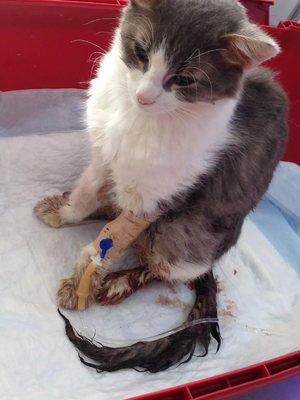 Понос у кошки причины и лечение в домашних условиях 677