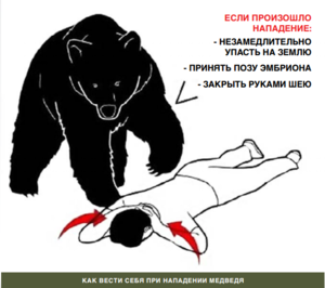 Медведи - очень быстрые звери