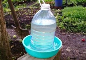 Как сделать поилку для птицы из пластиковой бутылки
