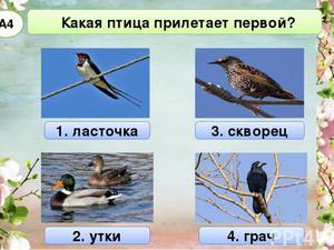 Какие птицы первые прилетают весной